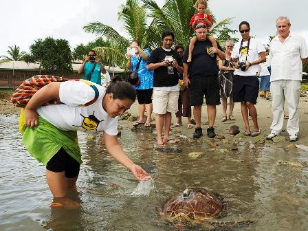 Turtle release 2 copy