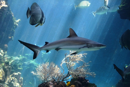 Side Events at 26th SPREP Meeting: Progressing shark protection in the Pacific