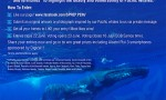 Final Call for SPREP's Protect Pacific Whales Facebook competition