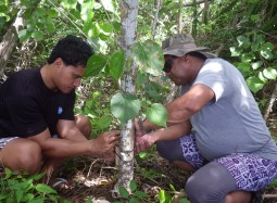Rat Eradication a Success in Tonga