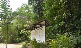 Honiara Botanical Gardens