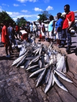 Solomon Islands fishing wharf